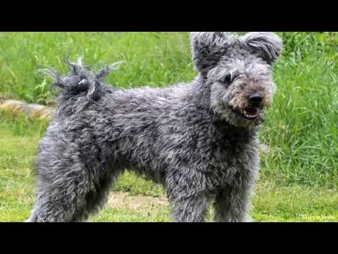 New Dog Breeds that got officially registered in 2017