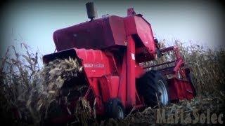 Cięcie Kukurydzy bez przystawki II Massey Ferguson 86 II MafiaSolec