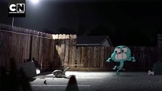 Turtle Bait I The Amazing World of Gumball I Cartoon Network
