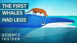 How Whales Became The Largest Animals Ever