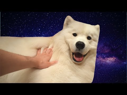 Shooting Stars, but it's played on a thicc doggo