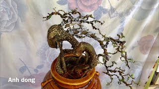 Ý tưởng để uốn được cây bonsai đẹp