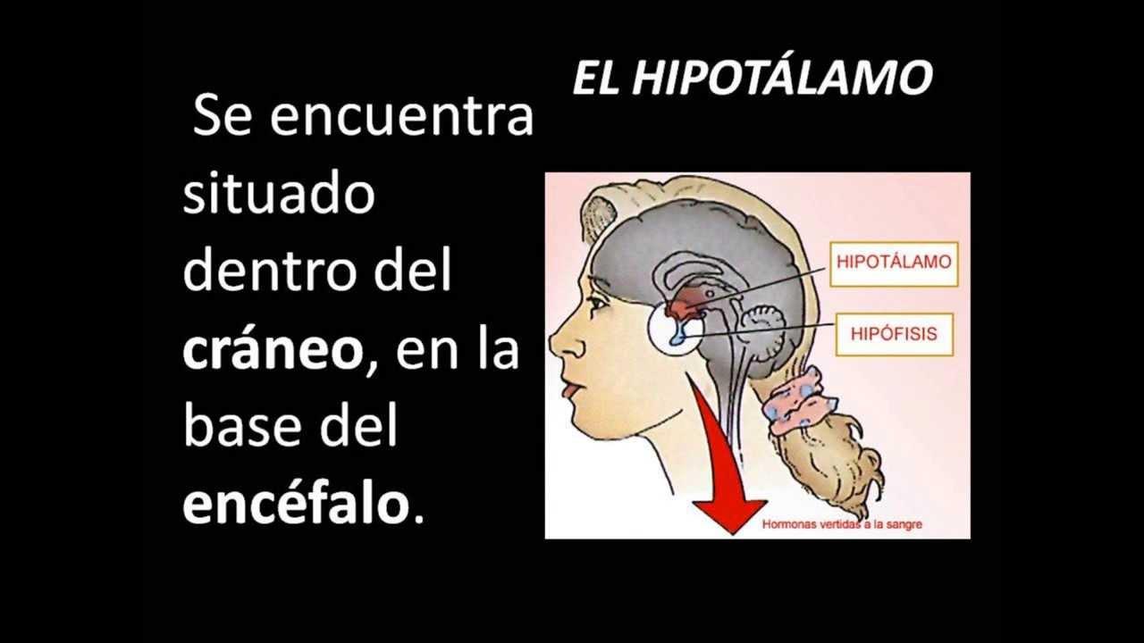 HIPOTALAMO - YouTube Mariah Carey Hero