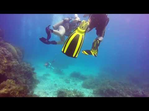 Scuba Diving - Sand Island - Key Largo, FL - August 2016
