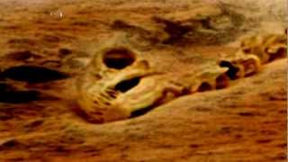 Dinosaur Found On Mars? 2013 1080p Available