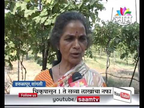 Agrowon: Sangli based Pramod Parulekar's Success Story of Chikoo Farming