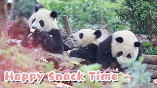 Welcome To Panda Theme Park | iPanda