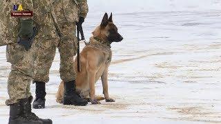 В Харькове провели показательные учения служебных собак