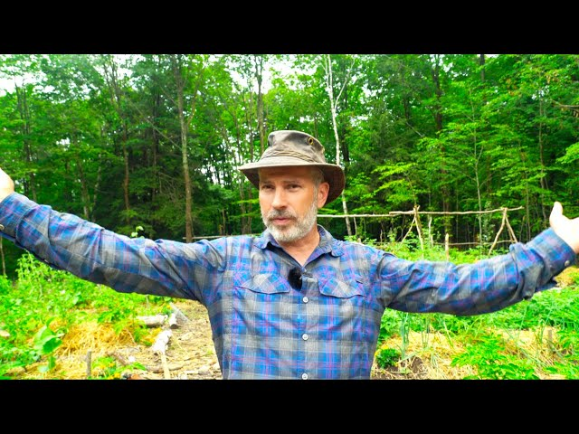 How to Grow Food in a Northern Forest | Forest Garden Update
