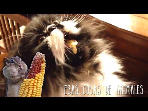 Los animales y sus cosas... Malgusto.com