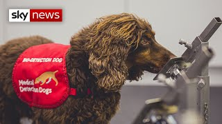 COVID-19: Super-sniffer Dogs Detect Virus 'with 94% Accuracy'