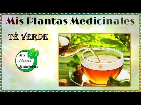 Para que es bueno el te verde - Beneficios del te verde para la salud