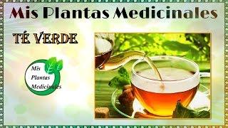 para que es bueno el te verde beneficios del te verde para la salud