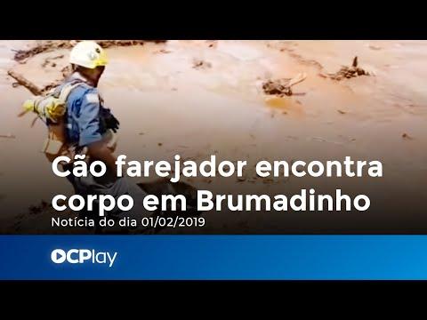 Cão farejador dos bombeiros militares de SC encontra corpo em Brumadinho