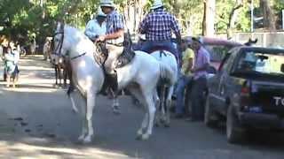 Playa Potrero, Costa Rica, Horses videography by ARS Video, Inc