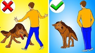 Warning If A Service Dog Approaches You Without Its Owner, Here's What To Do ?