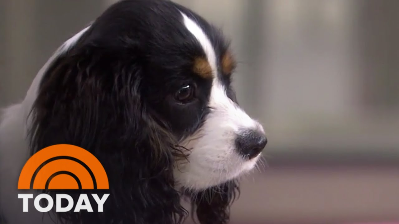 Olivia Munn Brings Her Dog Chance To Interview Today