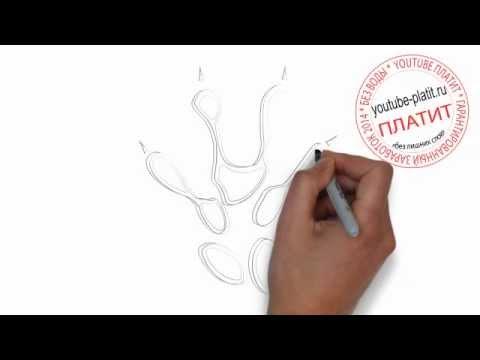 Как красиво нарисовать отпечаток кошачьей лапы