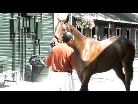OTB-TV Looks at the Fasig Tipton Horse Auction