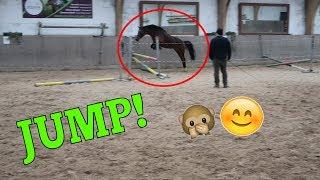 Paola ohne Reiter? 🤔 | Freispringen ♥ | Marina und die Ponys