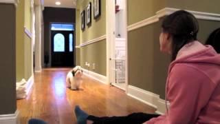 Winnie's Puppyhood: 5 Months Old
