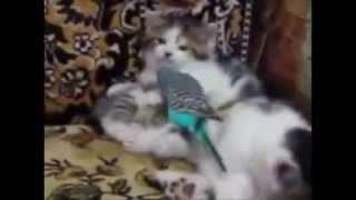 Котята и попугай  Смешное видео   Kittens and Parrot  Funny Videos