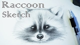 Raccoon Sketch - How to Draw a Raccoon  鉛筆畫 素描浣熊 「 手繪小浣熊 」小狸貓 動物素描 Animal Sketch