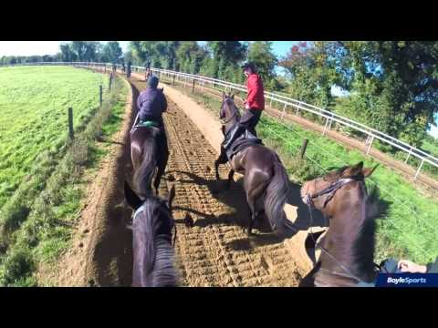 Gordon Elliott Yard Tour Feat. Don Cossack
