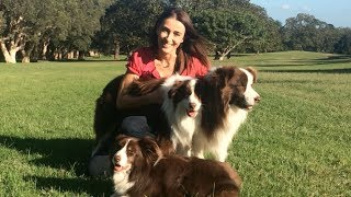 Border Collie Fun Day Invitation- 2014