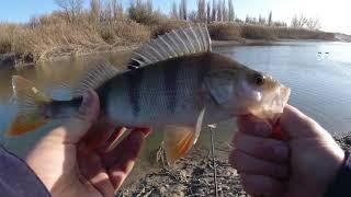 Весь день искал окуня и все таки нашел стаю КОНКУРС Рыбалка на ультралайтовый спиннинг
