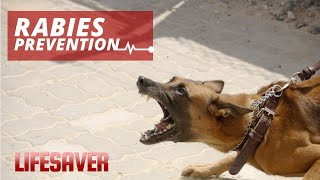 Rabies Prevention And How To Avoid Animal Bites | Lifesaver