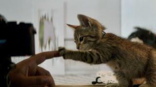 Keanu - Now Playing TV Spot [HD]