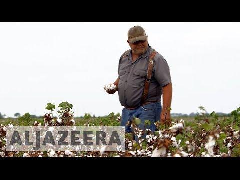 US: Hurricane Harvey leaves Texan cotton growers in despair