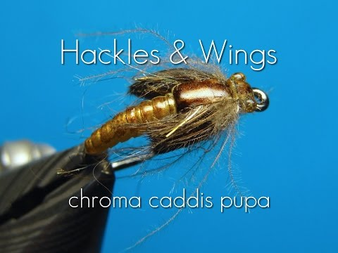 Fly Tying Chroma Caddis Pupa | Hackles & Wings
