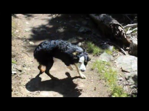 Hiking the Bighorn mountains to Lake Geneva with the kids, Tiff and dodger(my pup)