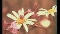 Продажа натуральной цветочной пыльцы и пчелиной обножки — низкие цены, накопительные скидки, быстрая доставка в москву, санкт-петербург и другие города.