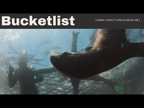 Snorkling with seals in Cape Town South Africa // BUCKET LIST #9 // Your Little Black Book