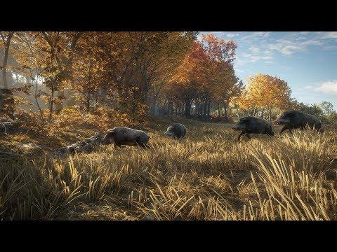 WILD BOAR HUNT-The Hunter:Call Of The Wild