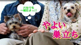【ヨークシャーテリア専門犬舎チャオカーネ】 約4年半、一緒に過ごした...
