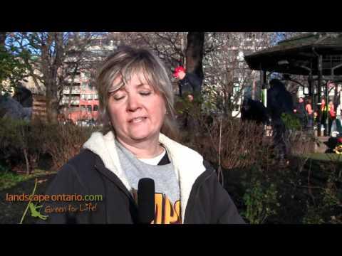 Susan Antler interview at St. James Park