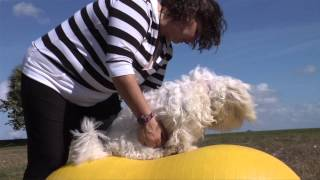 Take Paws: Exercising Y๐ur Pet with Christine Geschwill