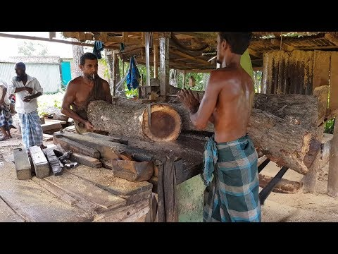 Jambul Wood Cutting by Cigarette Men Dangerous Way।Java Plum Wood Cutting by Skilled Men in Saw Mill