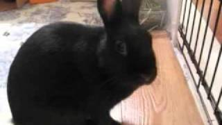 Adoptez la lapine Luna! - Adopt Luna the rabbit! Video 4