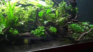 My Top 5 EASY Plants for Breeding fish