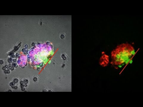 Self-Organizing Multicellular Structures