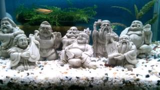 七福神の置物をメダカ水槽にレイアウトしてみました(*^_^*)