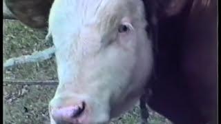 Repeat youtube video Marhavágás [Csak úgy kézzel] (1988)