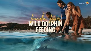 Wild Dolphin Feeding with Lincoln Lewis | LIVE from Aus, Moreton Island