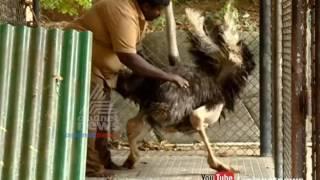Ostrich at Thiruvananthapuram Zoo dies due to bad weather