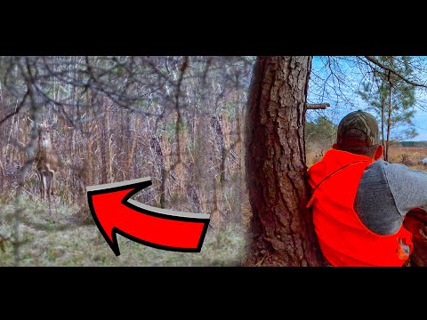 The FASTEST and most HUMANE Buck Hunt EVER!!! {Catch Clean Cook} Ft. The Hunter Chef